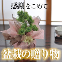 インテリア、ギフト需要にも!ミニ盆栽・小品盆栽の【盆栽妙】